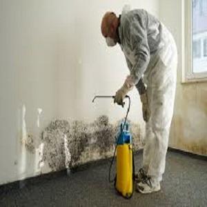 mold expert